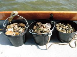 hmmmmm Emmers vol oesters foto Natasha Bloemhard
